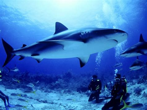 Shark Whale Wallpapers,