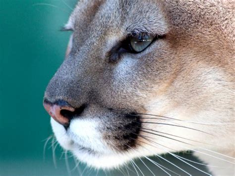 Best Places to See Wildlife in Florida : Wildlife in
