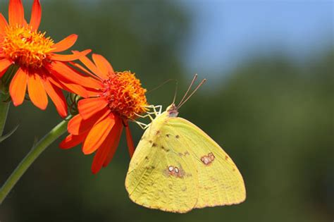 The Year of the Butterfly?   NC State Extension