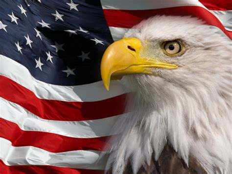 American Flag And Bald Eagle Symbol Of America Picture Hd