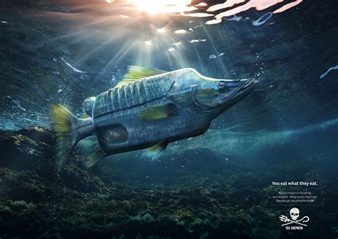 Sea Shepherd Print Advert By Ogilvy: Seabass | Ads of the
