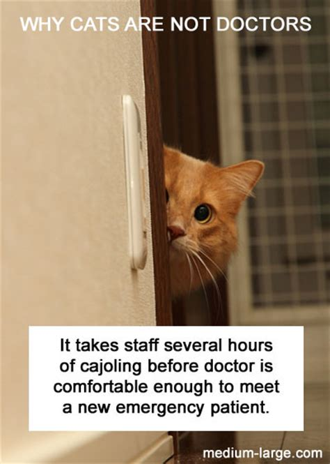 Why Cats Are Not Doctors - Neatorama