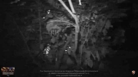 Image - Midnight Whistler nest